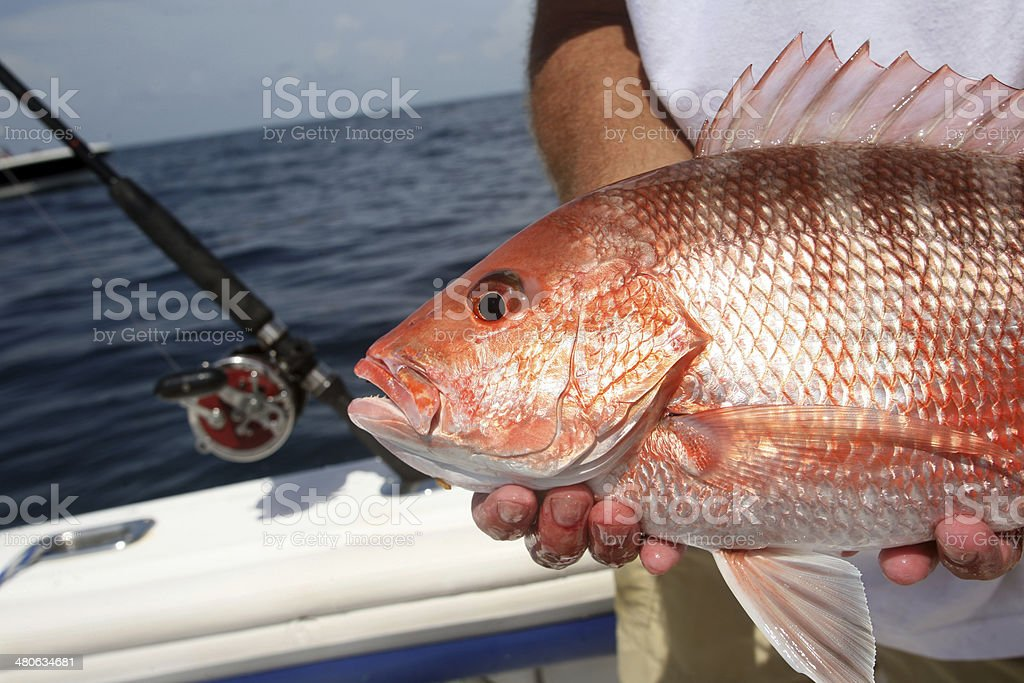 Florida Fishing Red Snapper Fish stock photo