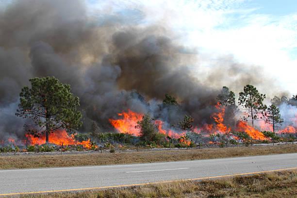 Florida Forest Ablaze stock photo