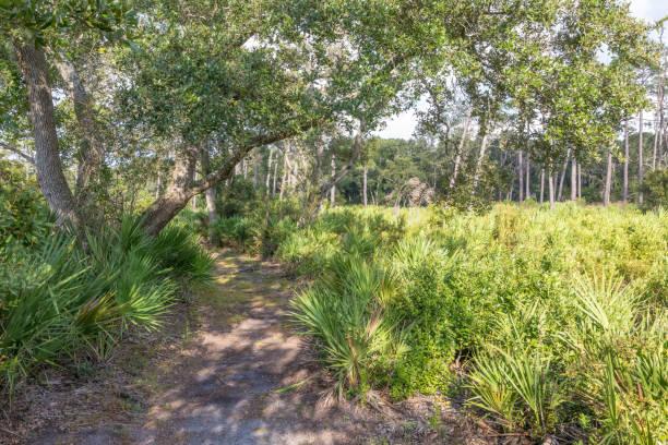 florida-wanderweg durch palmetto büsche - palmwedel stock-fotos und bilder