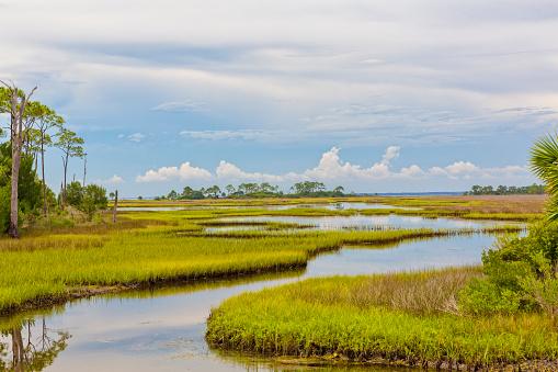 Beautiful view of Florida landscape