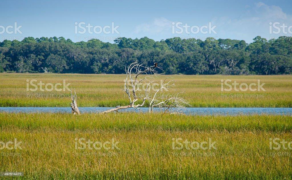 Florida Landscape stock photo