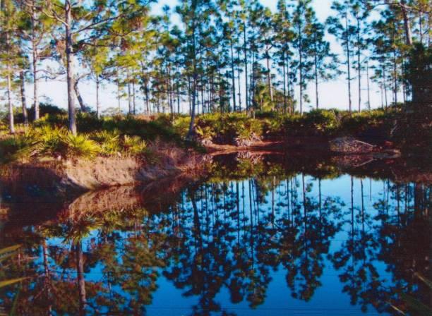 florida-landschaft mit teich reflexionen - palmwedel stock-fotos und bilder