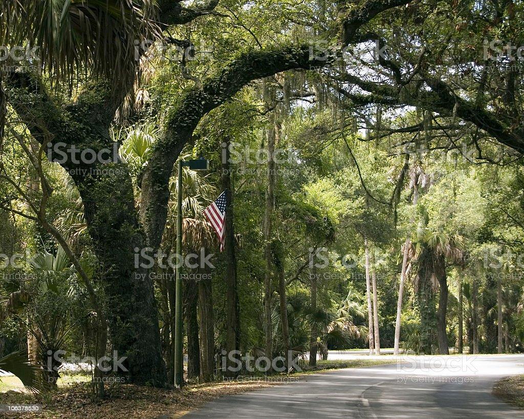live oak Flórida - foto de acervo