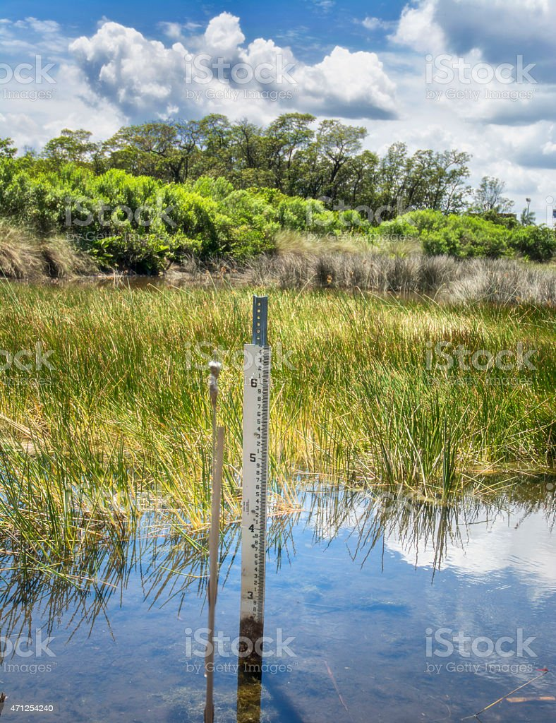 Florida Nature Preserve Wetlands With Measuring Stick stock photo