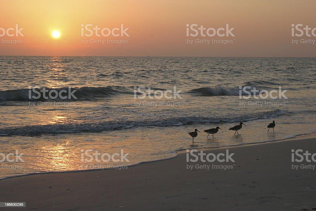 Florida Ocean sunset sunrise 4 Birds Wading royalty-free stock photo