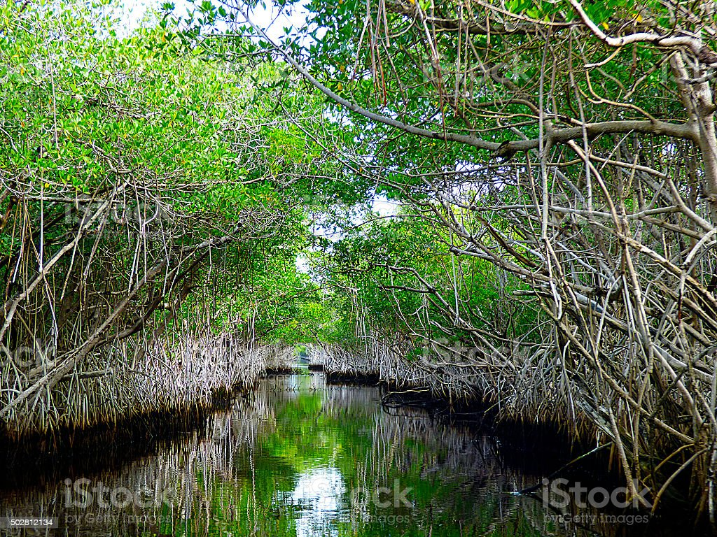 Florida, on airboat between the everglades stock photo