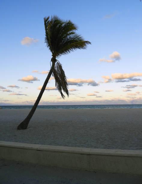 Florida Palm Tree at Sunset on Hollywood Beach stock photo