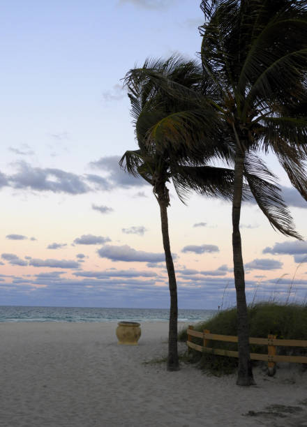 Florida Palm Trees at Sunset on Hollywood Beach stock photo