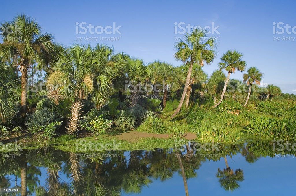 Florida Palms and Wetland royalty-free stock photo