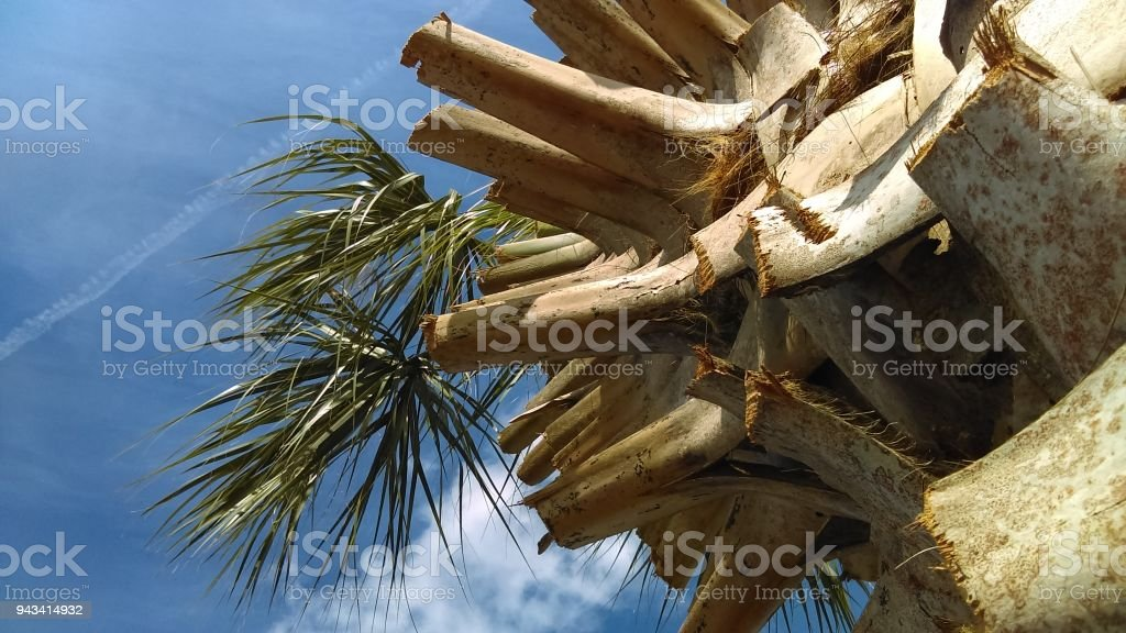 Florida Palms stock photo