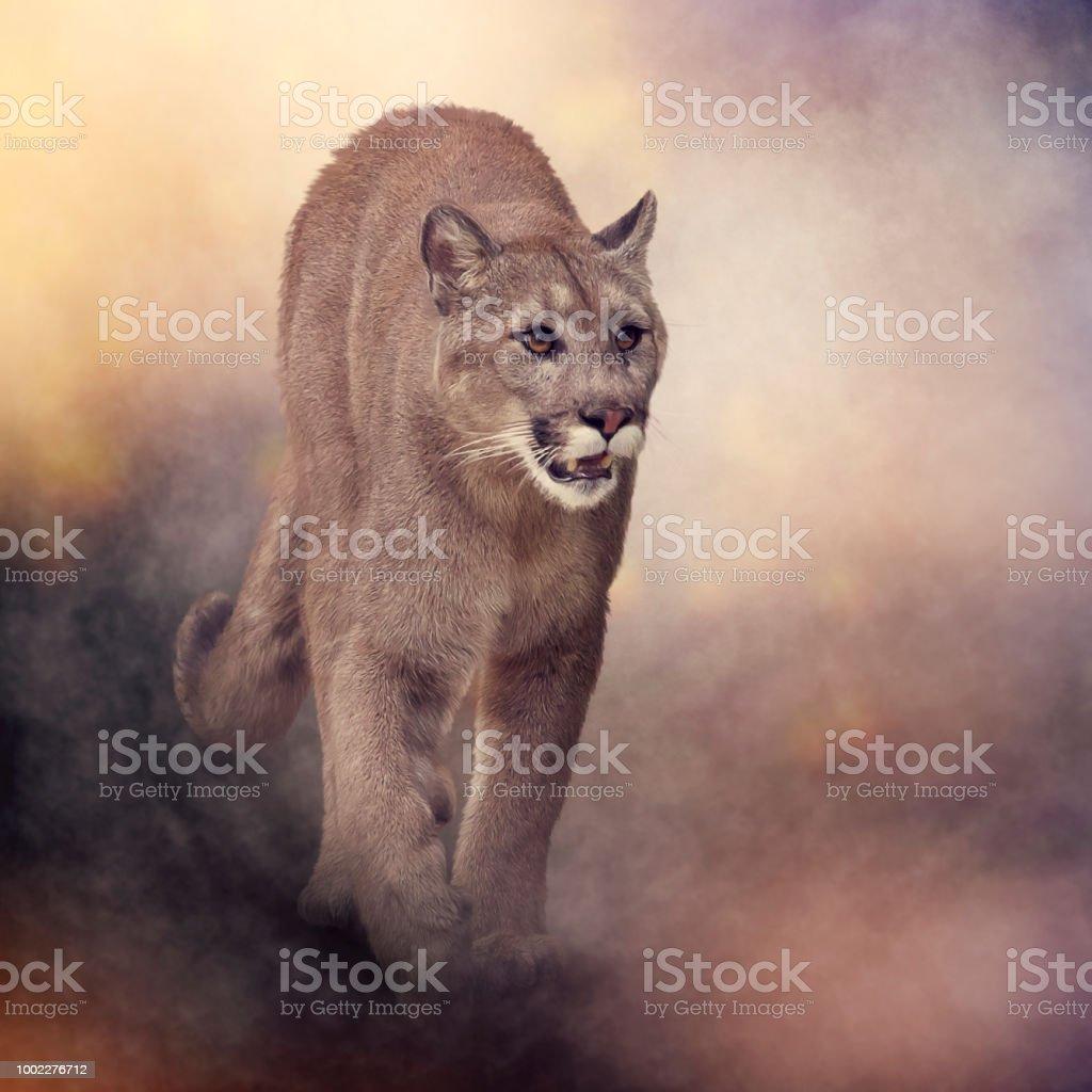 Rechazar patrón Rápido  Pintura De Puma O Pantera De La Florida Foto de stock y más banco de  imágenes de Animal - iStock