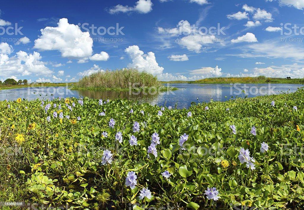 Florida River stock photo