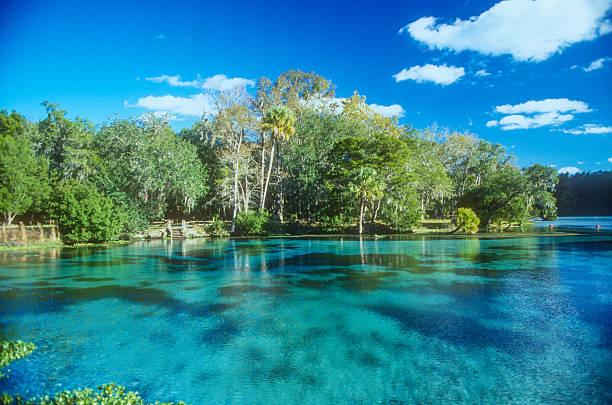florida – printemps - source naturelle photos et images de collection