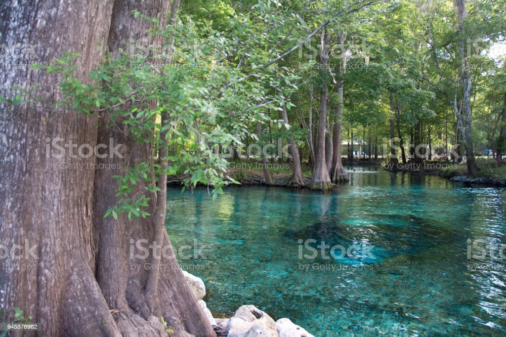 Florida springs stock photo