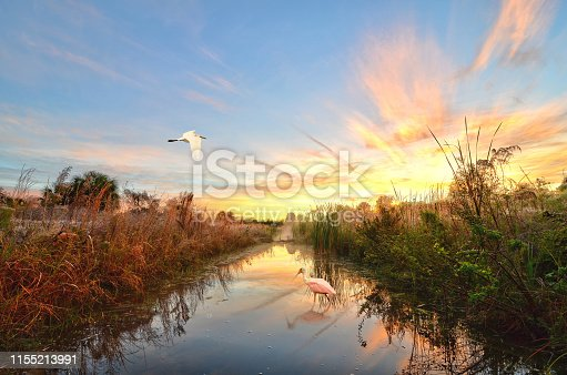 This gorgeous photograph was shot during the morning sunrise. It features a Roseate Spoonbill and Great White Heron sharing a glassy body of water.