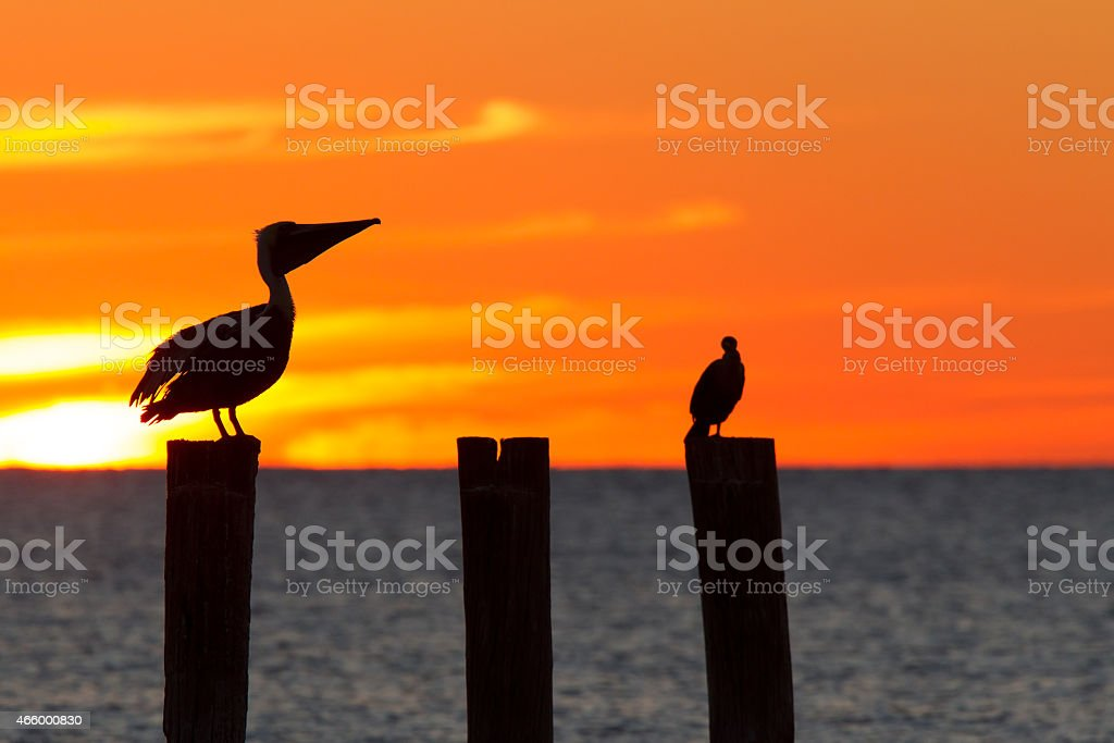Florida sunset with perched birds stock photo