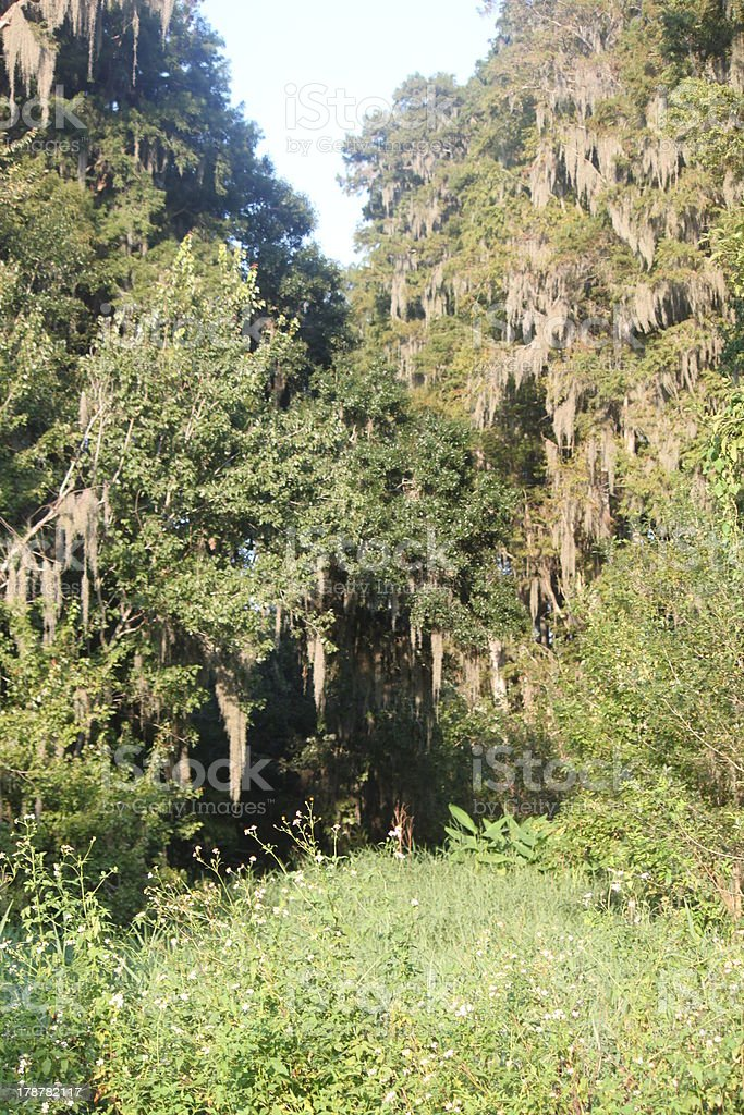Florida Trees and Plants royalty-free stock photo