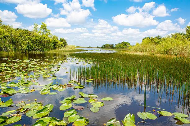 florida wetland, airboat ride at everglades national park in usa - teich stock-fotos und bilder