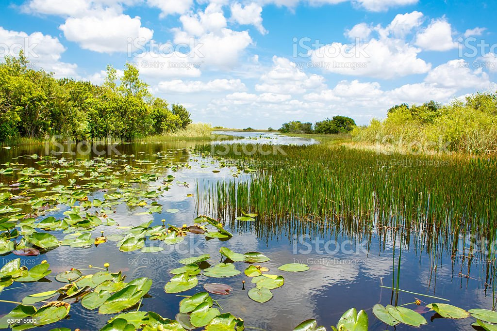 Florida wetland, Airboat ride at Everglades National Park in USA stock photo