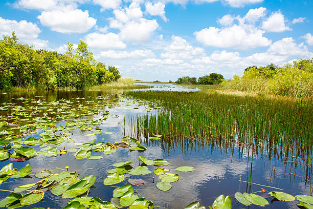 an analysis of the dangers of the problem of mercury in the florida everglades There is an ecological crisis in indian river lagoon a parallel story is taking place on florida's flowing into everglades national park and.