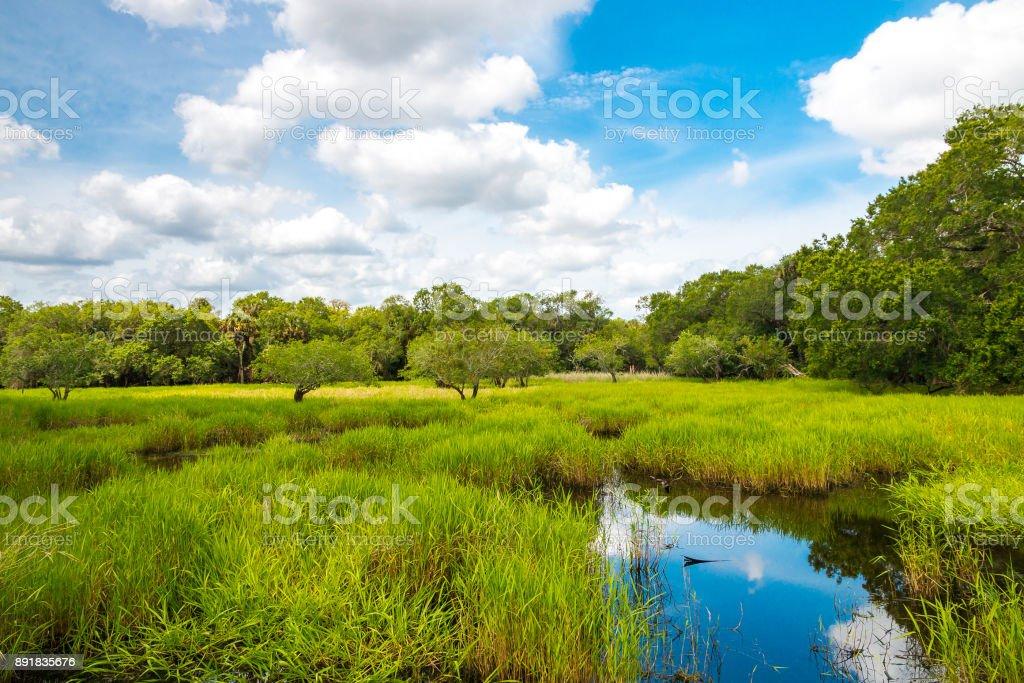 Florida Feuchtgebiet, natürliche Landschaft. – Foto