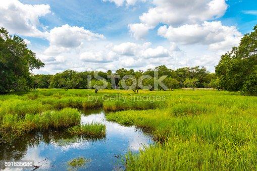Florida wetland, natural landscape.