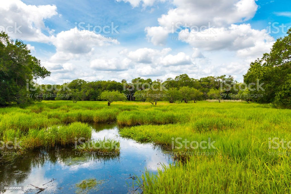 Florida wetland, natural landscape. stock photo