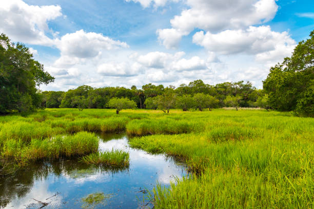 florida wetland, natural landscape. - mokradło zdjęcia i obrazy z banku zdjęć