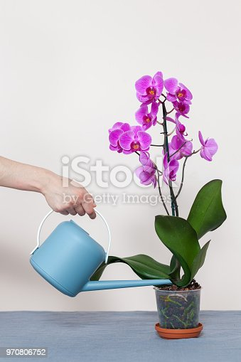 A florist girl pours an orchid from a watering can