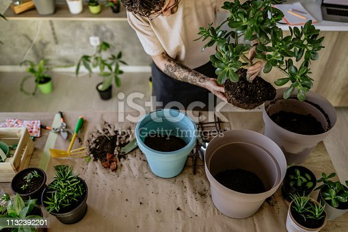 Florist Man Seedling Plants in His Flower Shop