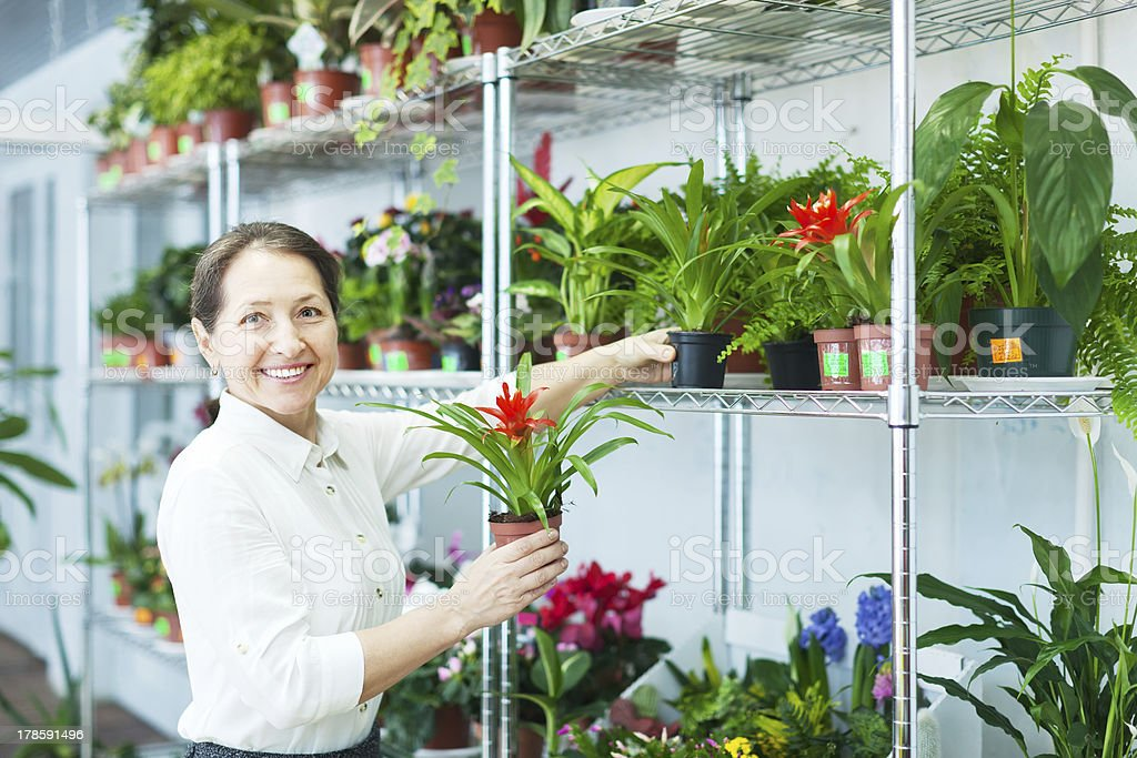 florist with Cyclamen  at flower store stock photo