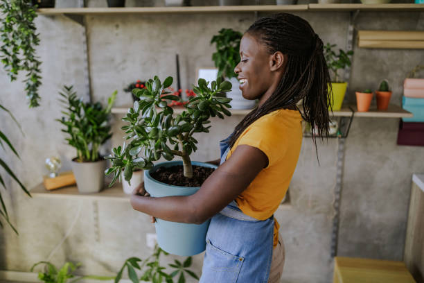 Florist Woman Seedling Plants Florist Woman Seedling Plants in Her Flower Shop potting stock pictures, royalty-free photos & images