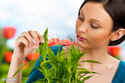 istock Florist woman working with flowers and plants at garden 621264554