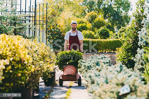 Gardener using hand truck to move potted plants
