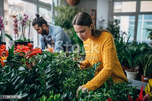 Two florists are at the flower shop, taking care of plants.