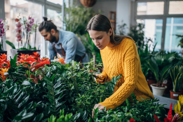 Florists enjoy working at the flower shop stock photo