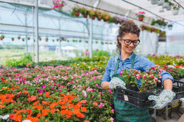 floristen-frauen, die arbeiten mit blumen in einem gewächshaus - gartenbau betrieb stock-fotos und bilder