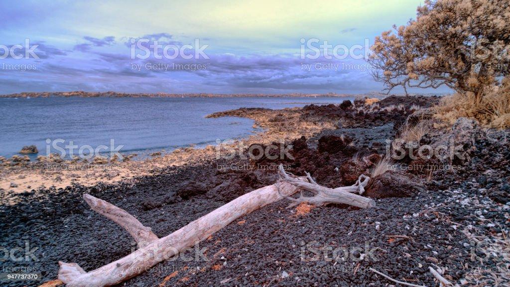 Flotsam on Rangitoto beach with Hauraki gulf in the background stock photo