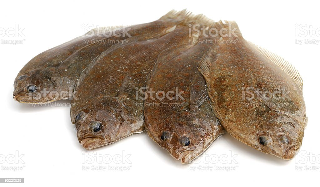 Flounder fishes royalty-free stock photo
