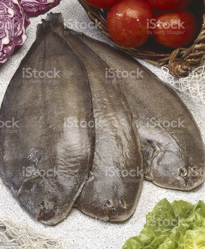 Flounders stock photo