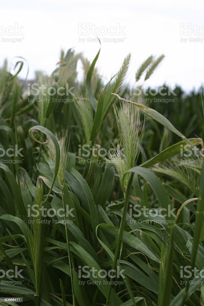 flourish stock photo