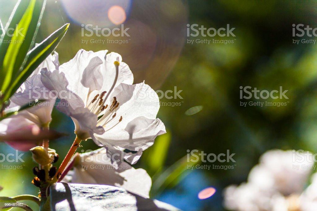 Flower 42 stock photo