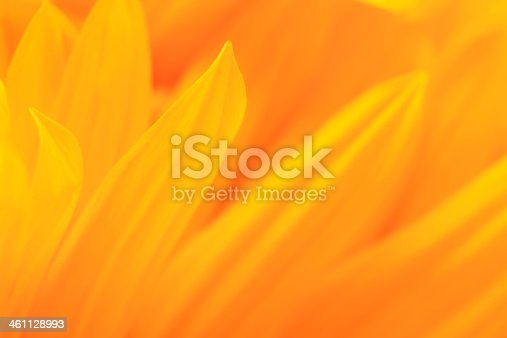 Close-up of sunflower petals. Selective focus, shallow DOF. Abstract floral background.