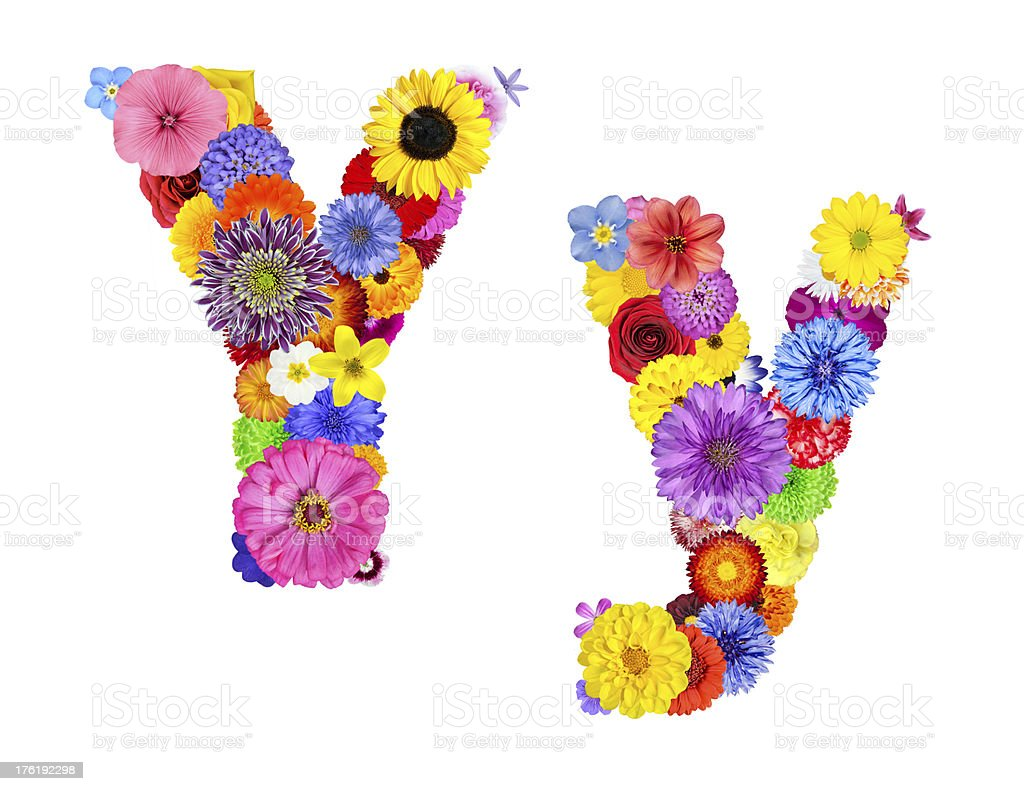Flower Alphabet Isolated on White - Letter Y royalty-free stock photo