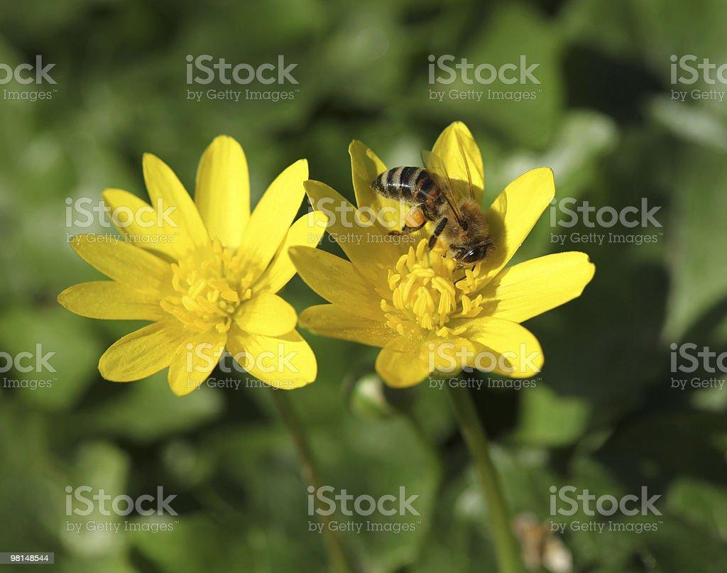 꽃 및 꿀벌 royalty-free 스톡 사진