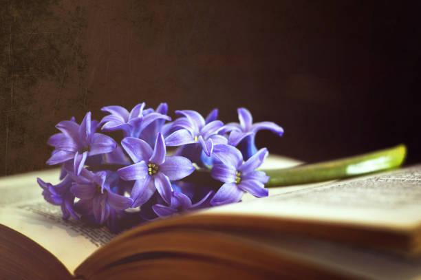 Blume und Buch auf dunklem Grunge-Bitgrund – Foto
