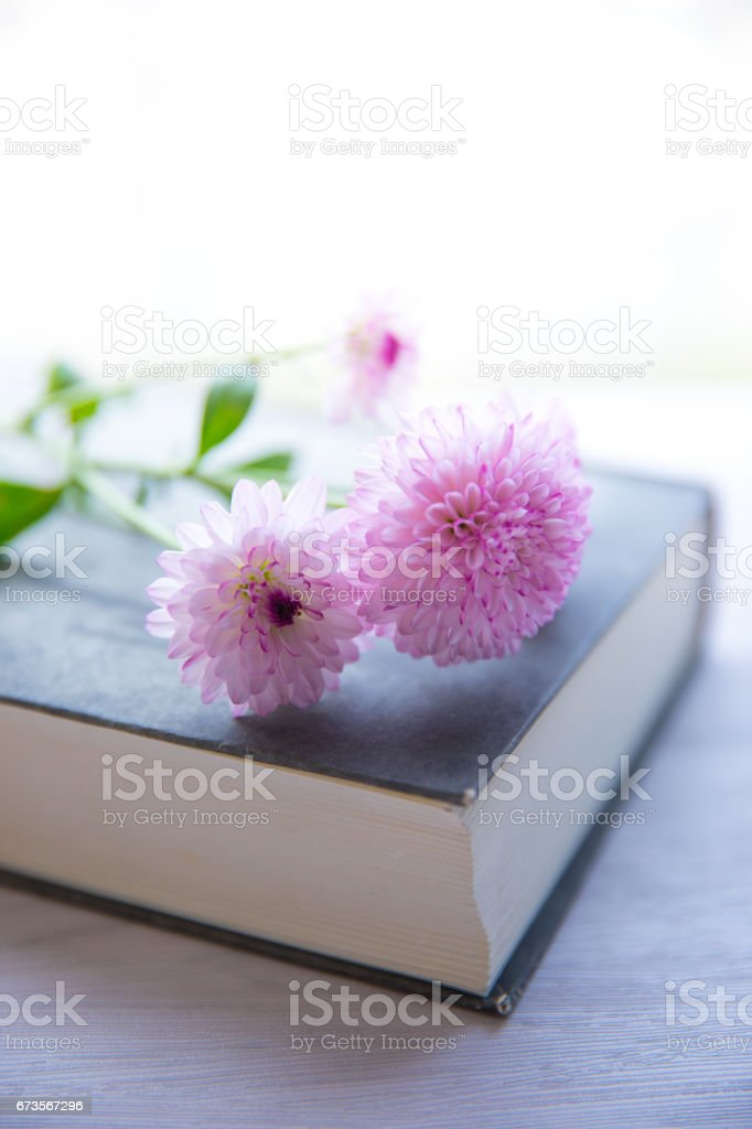 Flower and book on table royalty-free stock photo