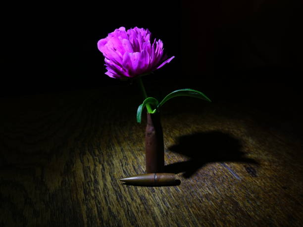 blume und kugel - lila waffe stock-fotos und bilder