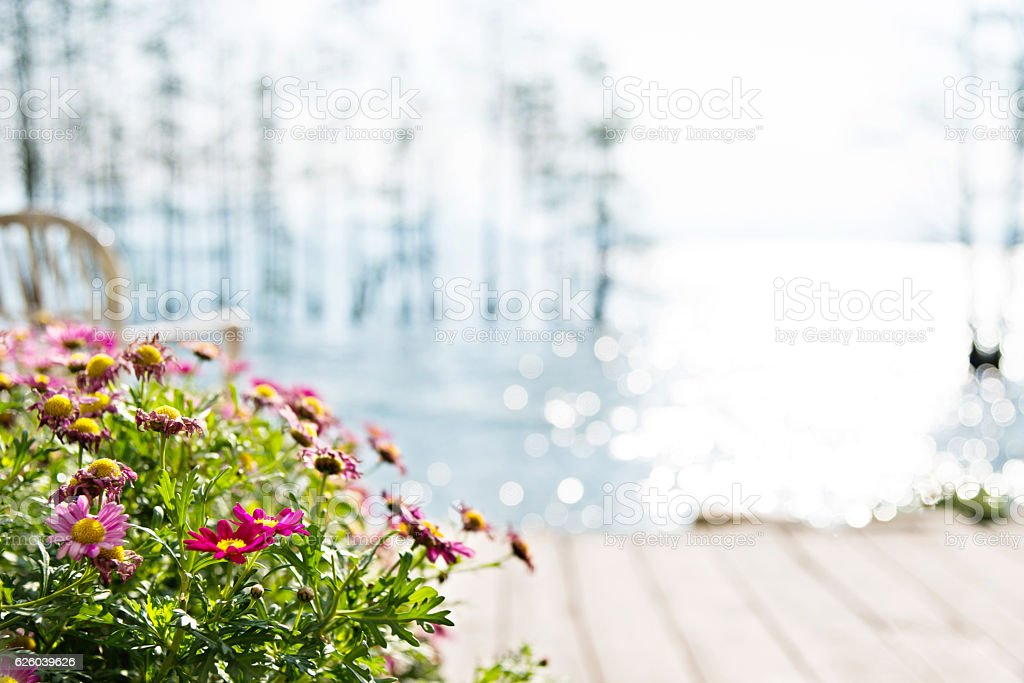 Flower and empty chair by the lake stock photo