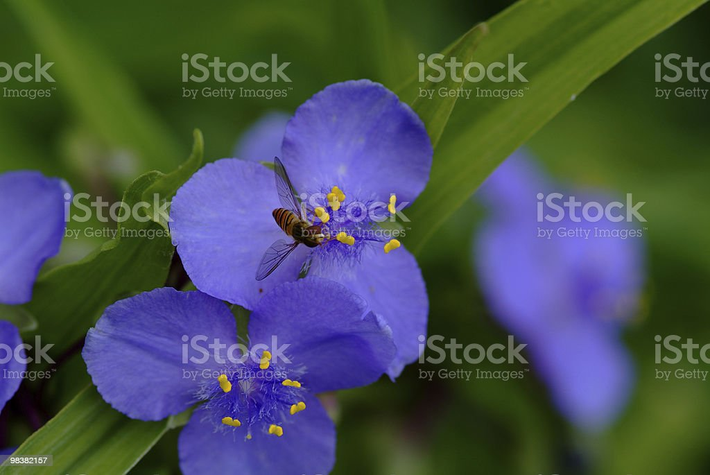 flower and fly royalty-free stock photo